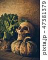 白黒 黒白 骨の写真 47381379