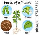 植物 ベクター 花のイラスト 47387840