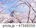 桜に包まれる長浜城 47388356