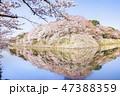 彦根城 桜 47388359