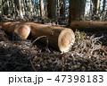 木の伐採 47398183
