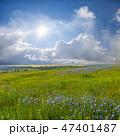 ブルー 青 青いの写真 47401487