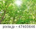 木 木々 森の写真 47403646