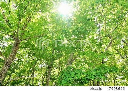 新緑の森 暖かい陽射し 47403646