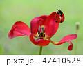 昆虫 虫 蟲の写真 47410528