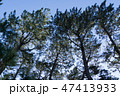 [静岡県] 三保の松原 47413933