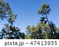 [静岡県] 三保の松原 47413935