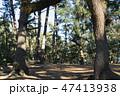 [静岡県] 三保の松原 47413938