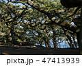 [静岡県] 三保の松原 47413939