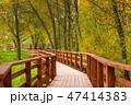 木 樹木 樹の写真 47414383