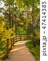 木 樹木 樹の写真 47414385
