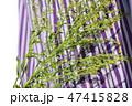 和風背景素材、昔の着物、草花 47415828