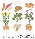 インフォグラフィック ベジタブル 野菜のイラスト 47416711