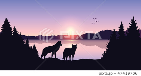 two wolves look to the lake and mountain landscape at sunrise 47419706