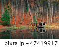 樹木 樹 ツリーの写真 47419917