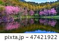 花 春 泉の写真 47421922