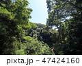 風景 緑色 緑の写真 47424160