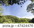 風景 野原 小網代の森の写真 47424476