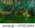 池山水源 日本 朝の写真 47431844