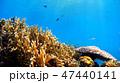 沖縄 渡嘉敷島の渡嘉志久ビーチ 水中写真 47440141