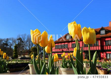 ふなばしアンデルセン公園のアイスチューリップとコミュニティセンター(1月)千葉県船橋市 47450833
