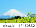 富士山 茶畑 茶葉の写真 47460332