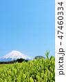 富士山 茶畑 茶葉の写真 47460334