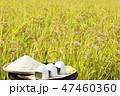 秋 田んぼ 植物の写真 47460360
