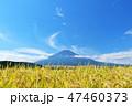 空 稲 米の写真 47460373