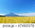 空 稲 米の写真 47460378