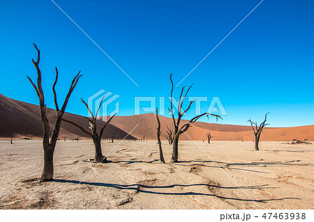 ナミビア ナミブ砂漠 死の沼、デッドフレイ 47463938