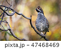 野鳥 鳥 動物の写真 47468469