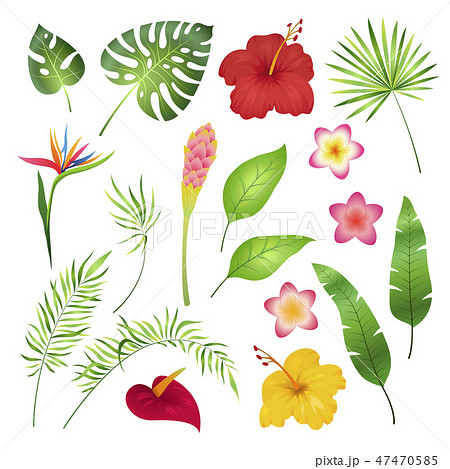 Tropical flowers and leaves. Caribbean tropical flower leaf hibiscus orchid hawaii exotic, garden 47470585