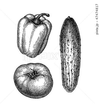Ink sketch of vegetables 47474817