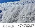 聖高原 霧氷 樹氷の写真 47478287