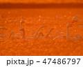 東庄 白鳥 鳥の写真 47486797