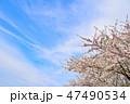 桜 春 染井吉野の写真 47490534