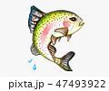 ニジマス 47493922