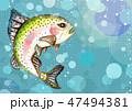水の中のニジマス 47494381