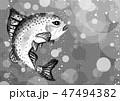 水の中のニジマス 47494382