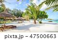ビーチ 海 椰子の木の写真 47500663