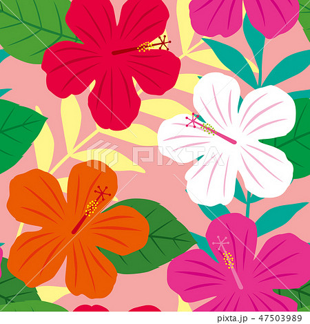パターン 花柄 ハイビスカス柄 ピンク 47503989