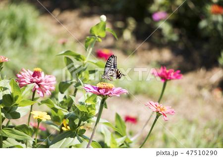 春の花 花 春 47510290