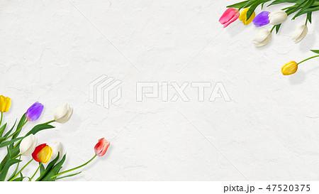 背景-花-壁-春-白壁-チューリップ 47520375