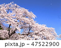 桜 植物 花の写真 47522900
