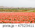 川 咲く 花の写真 47523411