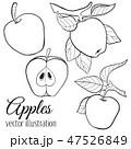 りんご アップル リンゴのイラスト 47526849