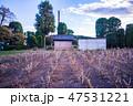 (群馬県)世界遺産・富岡製糸場 桑の生態展示 47531221