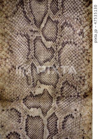 蛇柄 47535130