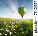 Air ballon above field with flowers 47542557